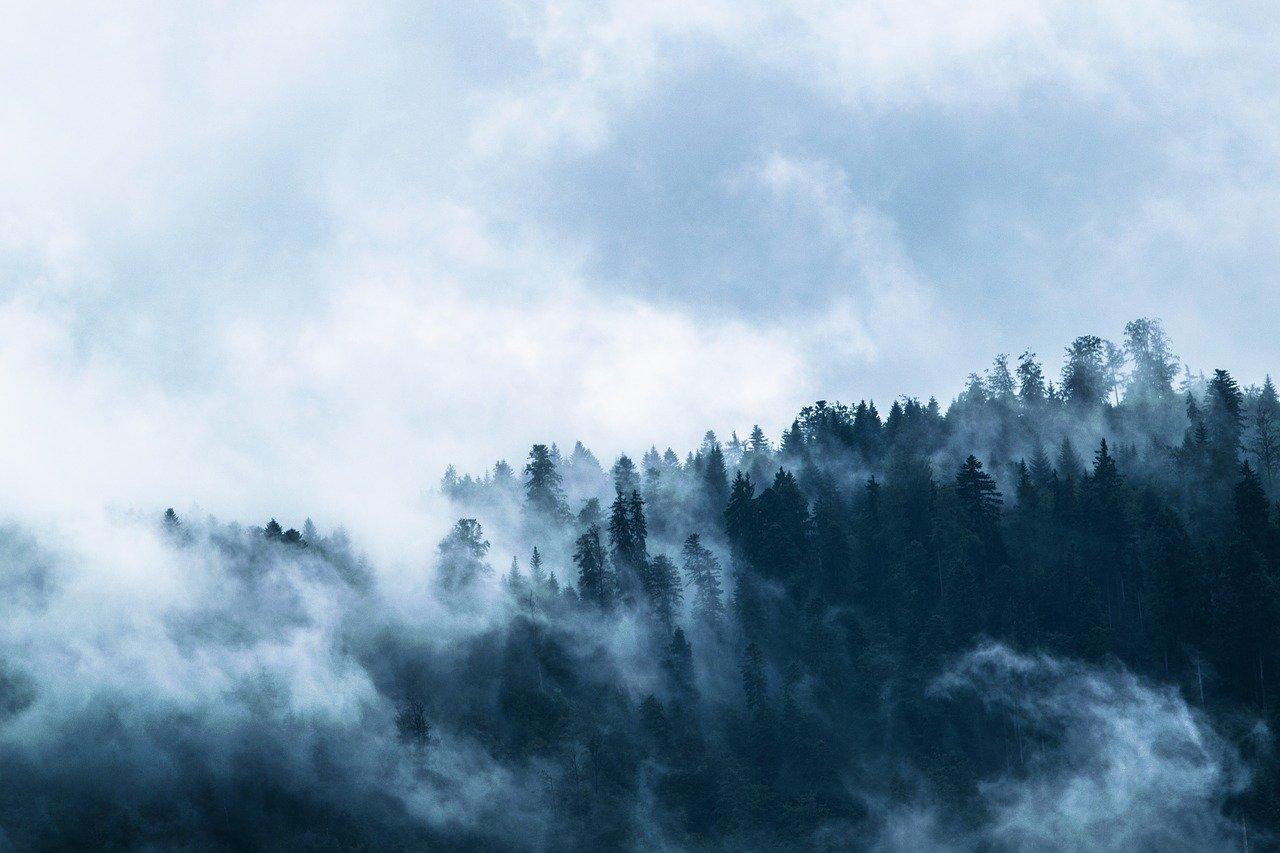 Obraz na płótnie natura. Obraz las we mgle